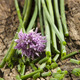 chopped chives on a wooden board - PhotoDune Item for Sale