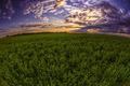 Setting Sun in a Field - PhotoDune Item for Sale