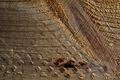 Lumber Texture - PhotoDune Item for Sale