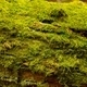 Moss - PhotoDune Item for Sale