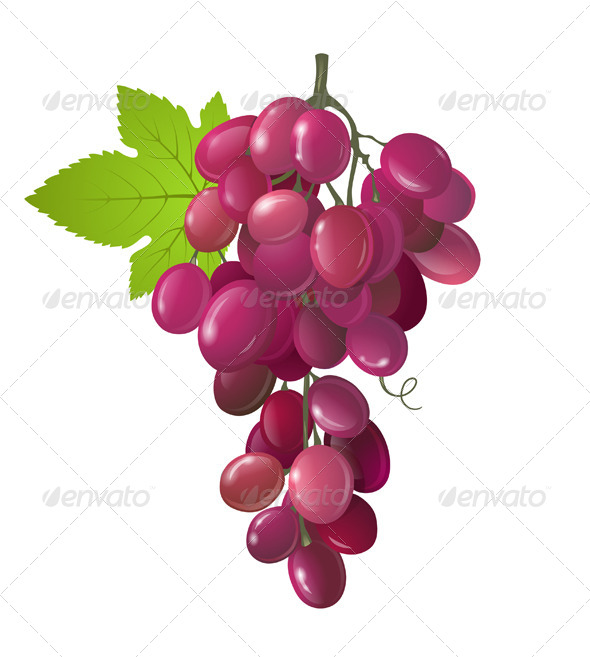 GraphicRiver Grapes 4744847