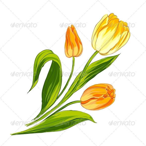 GraphicRiver Tulip Bouquet 4746040