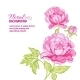 Pink Peonies Background with Sample Text - GraphicRiver Item for Sale