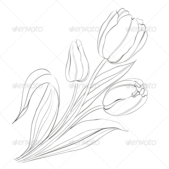Hand Drawn Tulips