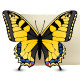 Butterfly Banners - GraphicRiver Item for Sale