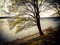 Beech tree by the sea retro - PhotoDune Item for Sale