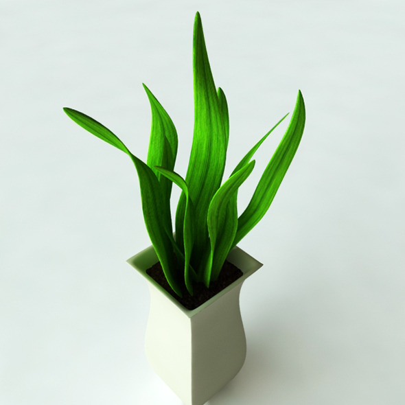 3D Models Potted Plant-2 - 3DOcean Item for Sale