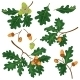 Oak Branches with Leaves and Acorns - GraphicRiver Item for Sale