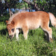 cute pony foal on pasture - PhotoDune Item for Sale