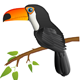 Toucan  - GraphicRiver Item for Sale