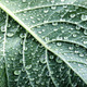 green leaf with drops of water - PhotoDune Item for Sale