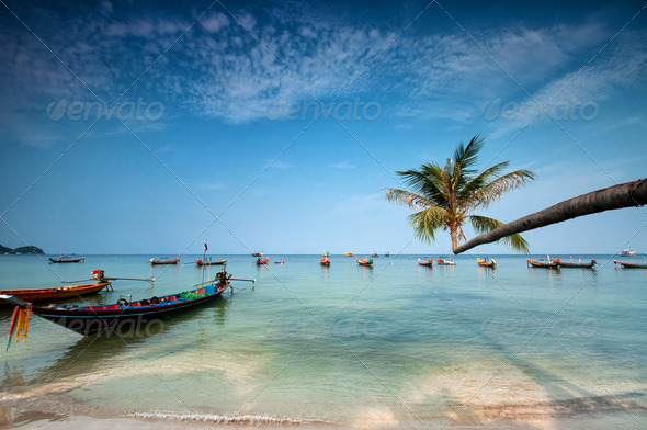 palm and boats on tropical beach, Thailand - Stock Photo - Images
