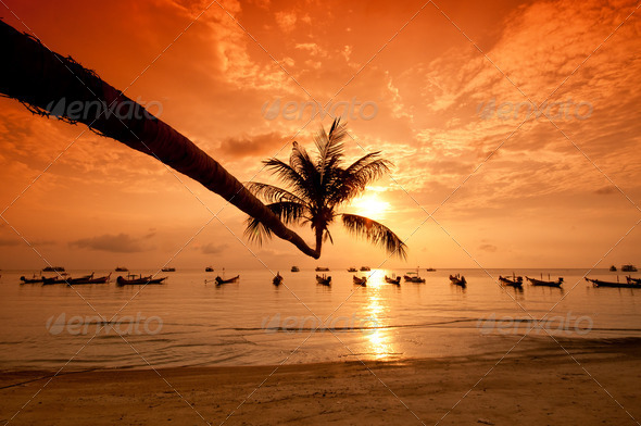Sunset with palm and boats on tropical beach - Stock Photo - Images
