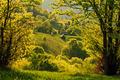 Spring gold evening landscape in the Carpathian mountains - PhotoDune Item for Sale