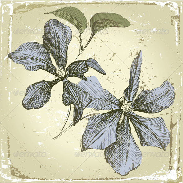GraphicRiver Hand Drawn Clematis Flowers 4780739