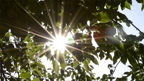 Sun Glitters Through Leaves