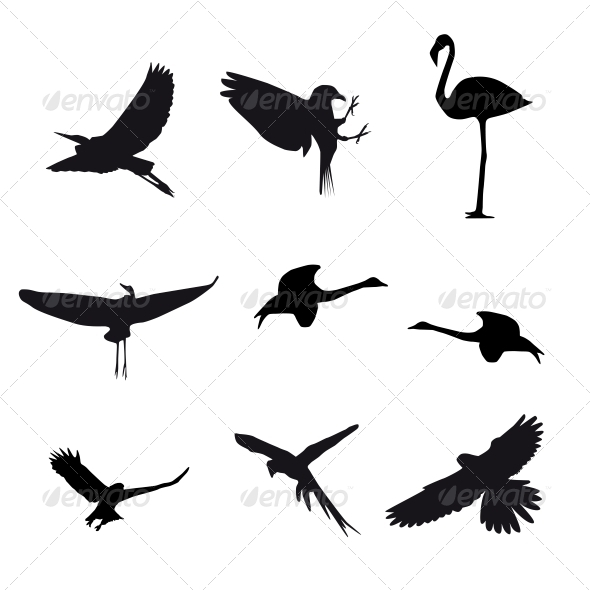 GraphicRiver Set of Different Birds 4797553