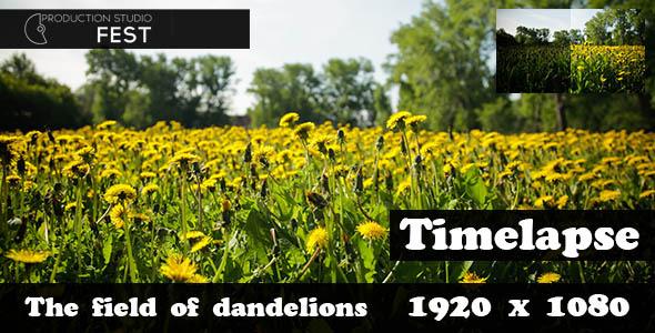 The Field Of Dandelions