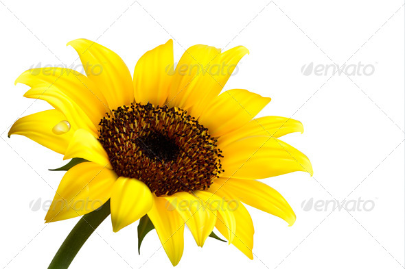 GraphicRiver Background with Yellow Sunflower 4792983