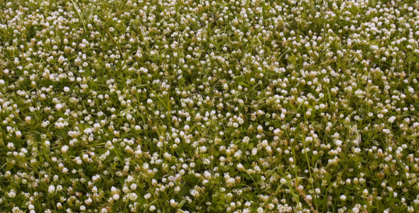 Windy Grass
