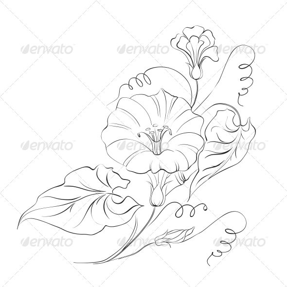 GraphicRiver Bindweed Flower in White 4827746
