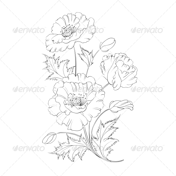 GraphicRiver Poppies Flower 4835774