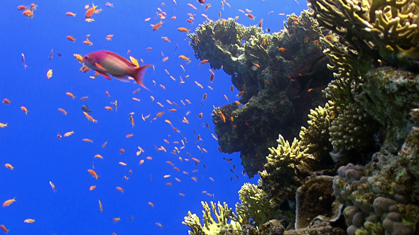 Colorful Fish on Vibrant Coral Reef 11