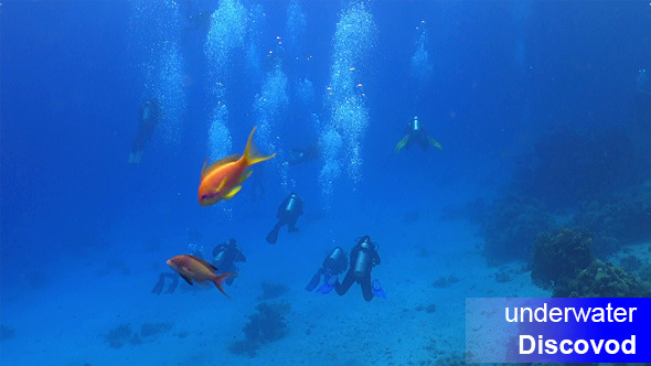 Group of Divers Swims Over Coral Reefs 1