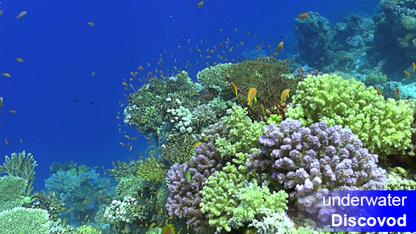 Colorful Fish on Vibrant Coral Reef 19