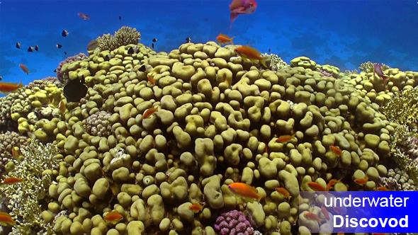 Colorful Fish on Vibrant Coral Reef 22