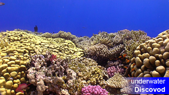 Colorful Fish on Vibrant Coral Reef 25
