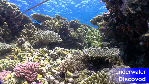 Colorful Fish on Vibrant Coral Reef 27