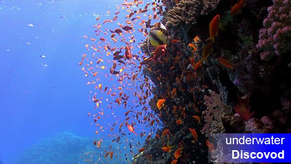 Colorful Fish on Vibrant Coral Reef 29
