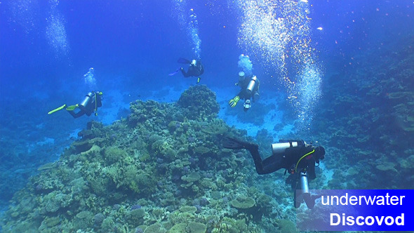 Group of Divers Swims Over Coral Reefs 2