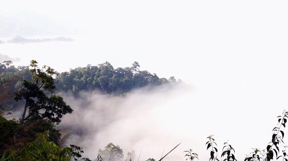 Time Lapse Floating Fog Landscape In Forest