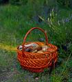 Basket of Mushrooms - PhotoDune Item for Sale