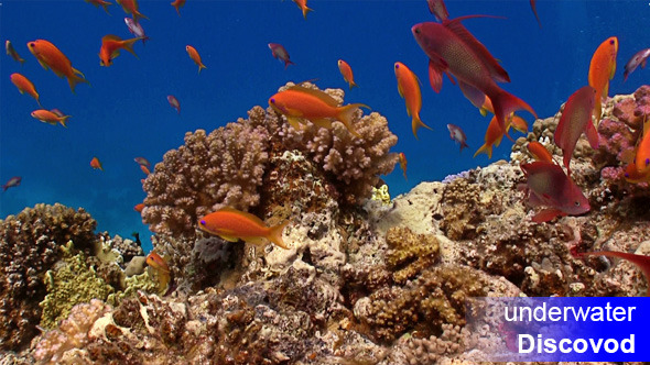 Colorful Fish on Vibrant Coral Reef 4