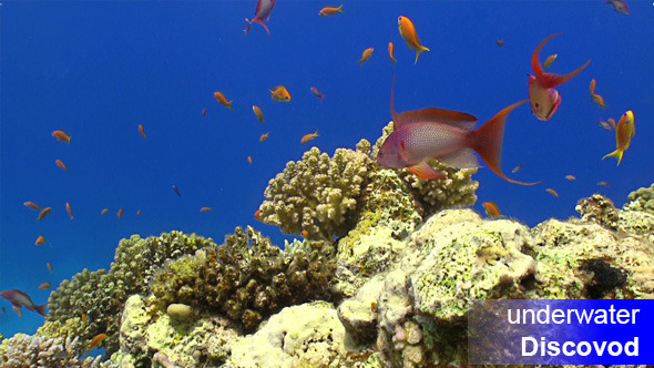 Colorful Fish On Vibrant Coral Reef Static Scene 4