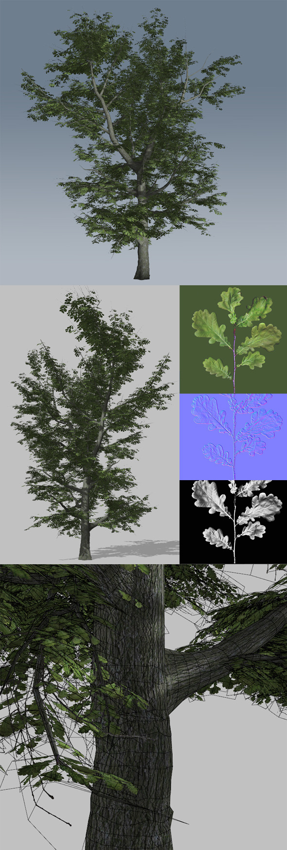 3DOcean Common Oak 1 4861595