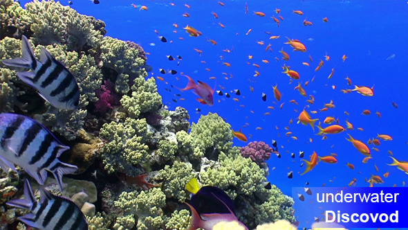Colorful Fish On Vibrant Coral Reef Static Scene 9
