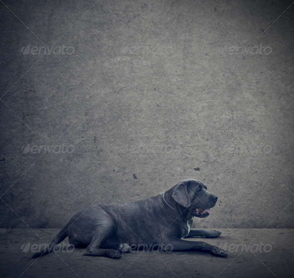 big dog - Stock Photo - Images