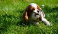 happy dog - PhotoDune Item for Sale