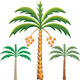 Vector three date palm trees  - GraphicRiver Item for Sale