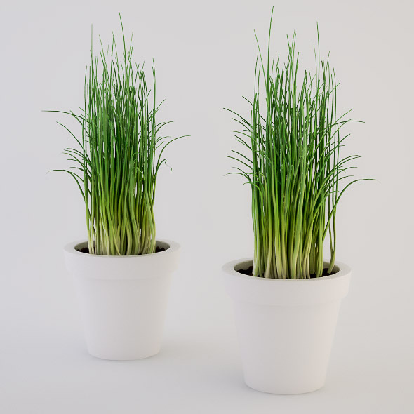 Chives in a Pot - 3DOcean Item for Sale