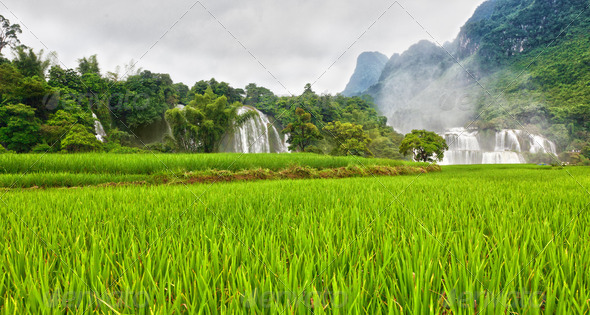 Rice field and waterfall - Stock Photo - Images