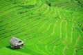 Rice field terraces - PhotoDune Item for Sale