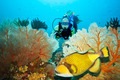 Triggerfish and diver - PhotoDune Item for Sale
