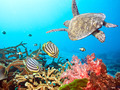 Butterflyfishes and turtle - PhotoDune Item for Sale