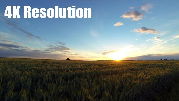 Wheat Field Sunset 4K Time Lapse