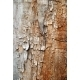 Texture of cracked wood - GraphicRiver Item for Sale